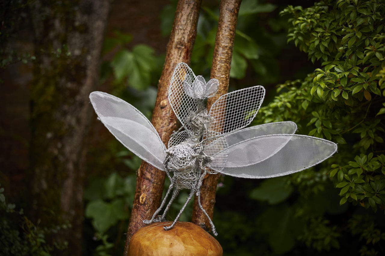 Queenie on Dragonfly